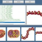 DNA EXPERT-2